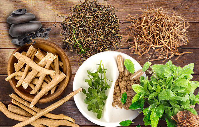 World's Most Popular Herbal Medications And Benefits